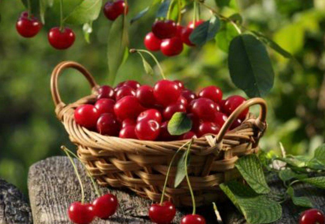 Мало кто знает, но у вишни есть одно очень полезное для всех свойство  В ней...