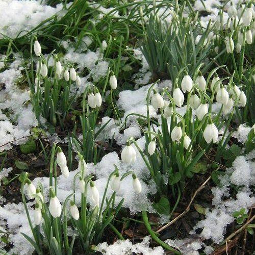 Сорвёшь цветочек — вздрогнет вся Земля, застонет ветер и заплачут ивы… Родился...