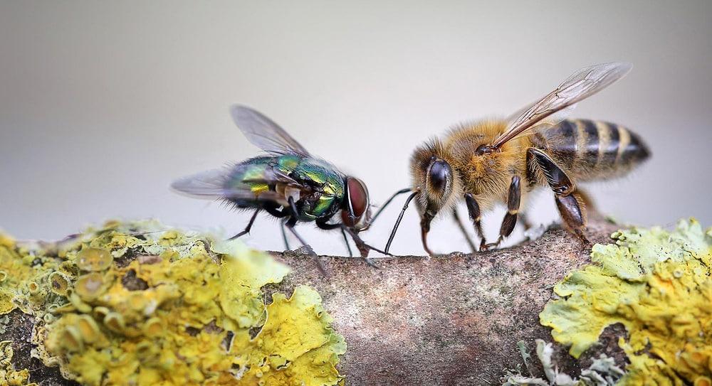 О мухе и пчеле  На лугу росло множество цветов: и благоухающие лилии, и...