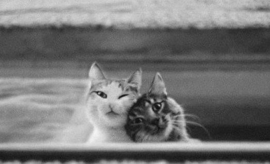 Близость двух...  Любовь очень сильное и, одновременно, хрупкое чувство. Ранить...