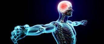Чтобы ваш мозг не усыхал  Достаточно проходить по полтора километра в день...