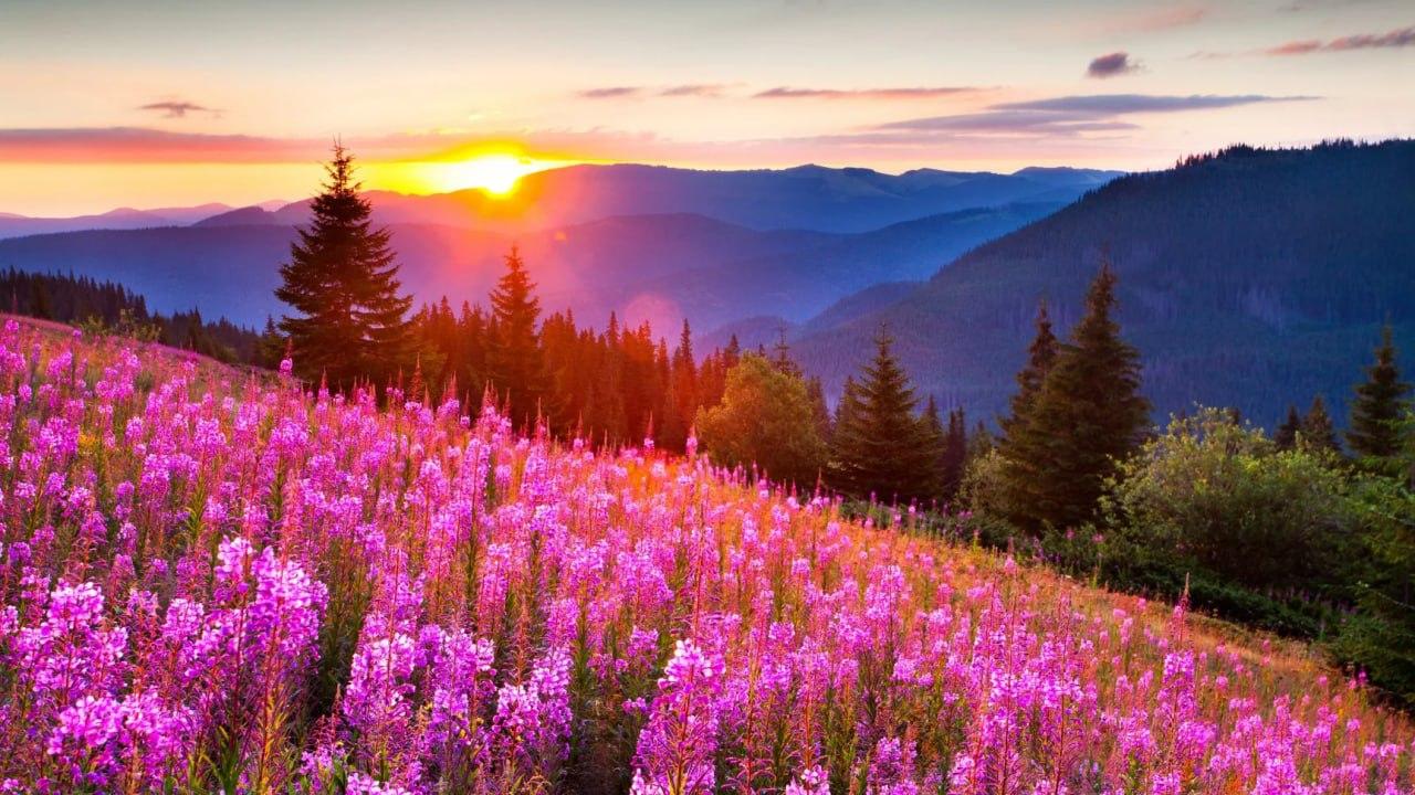 Подборка лучших цитат на 11 апреля   1] Твои мысли становятся твоей жизнью.  2]...