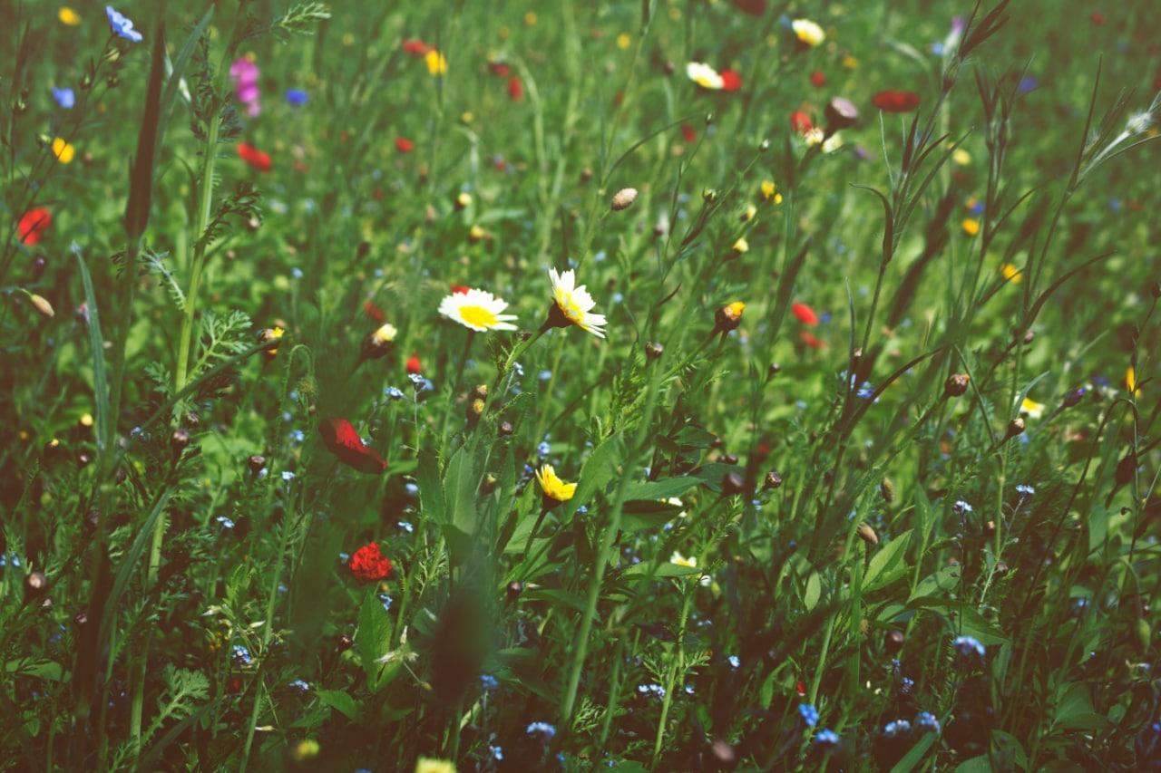 Весна  Наконец-то в моём городе наступила весна, это конечно же радует меня...