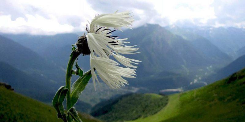 Ветер и цветок    Ветер встретил прекрасный Цветок и влюбился в него. Пока он...