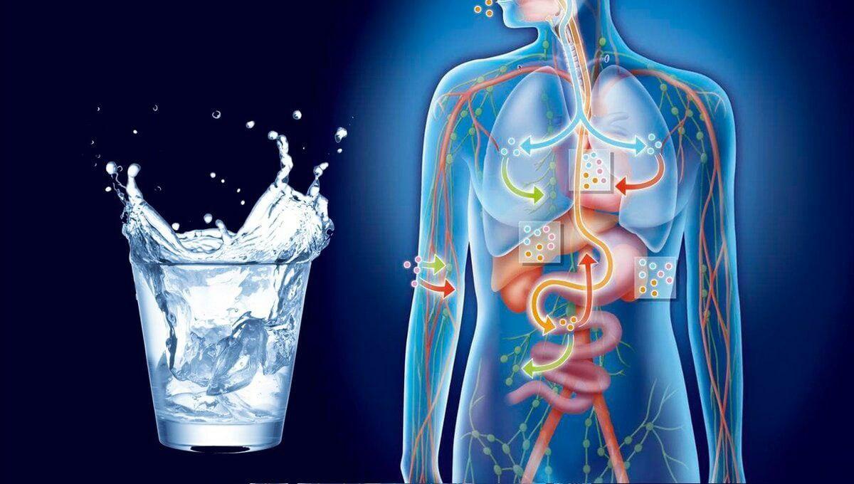 Так ли важна вода?  Потеря влаги в размере 6–8% от веса тела вызывает у...