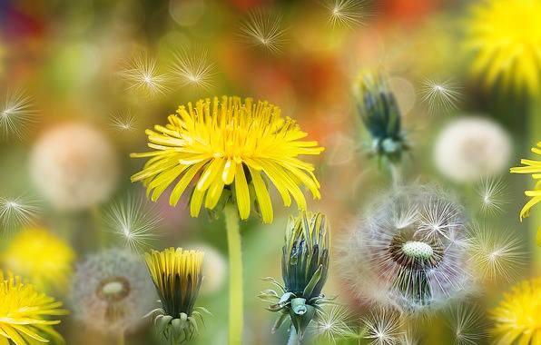 Будь спокоен.  Со спокойствием придёт и понимание. С пониманием придёт радость.