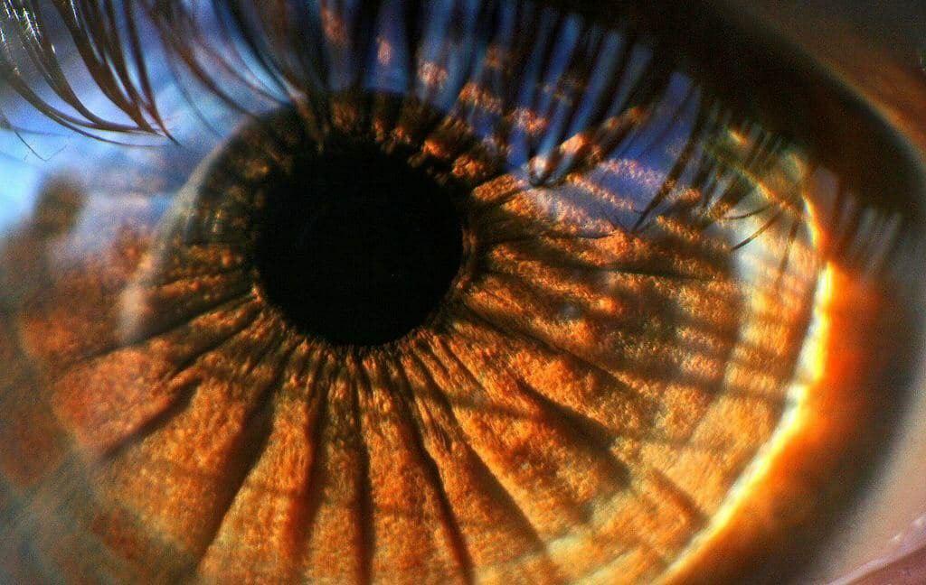 Не смотрите на солнце без солнцезащитных очков. ⠀ В строении глаза отсутствуют...