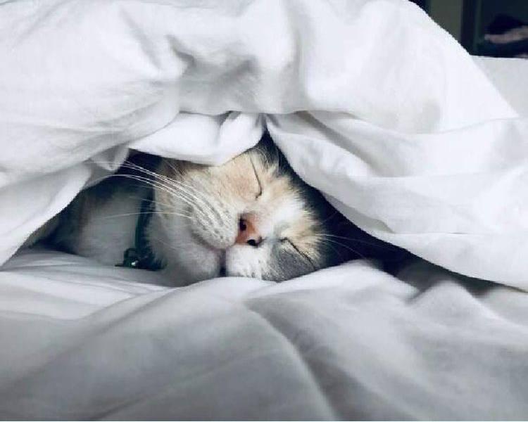 Настраивайтесь на чудесный сон! Во время сна мы получаем порцию энергии...
