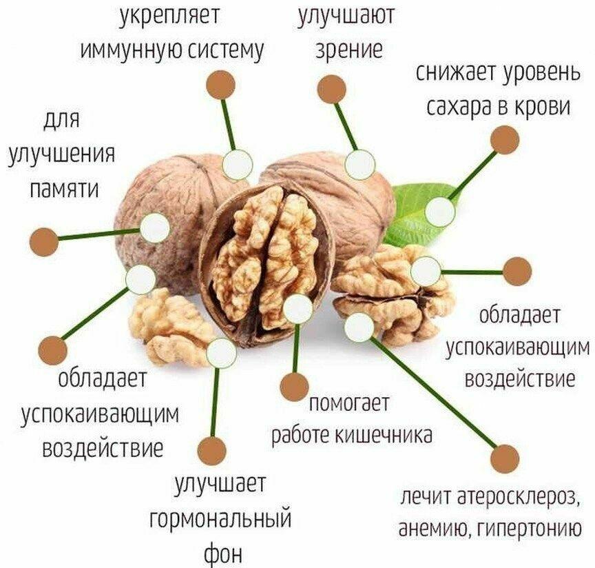 ️Польза грецких орехов  Важно знать всем!  Польза и вред орехов, наглядно в...