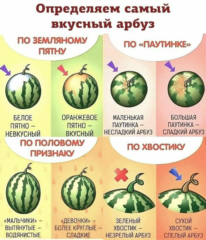️ Определяем самый вкусный арбуз.  Арбуз содержит аминокислоту цитруллин...