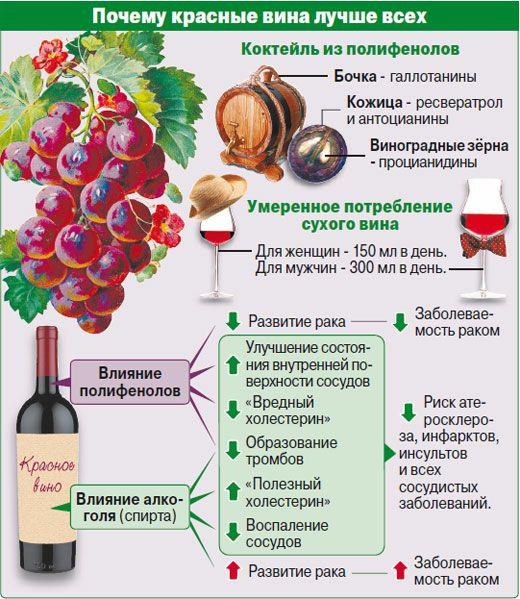 ️Умеренное употребление вина может улучшить умственные способности  Норвежские...