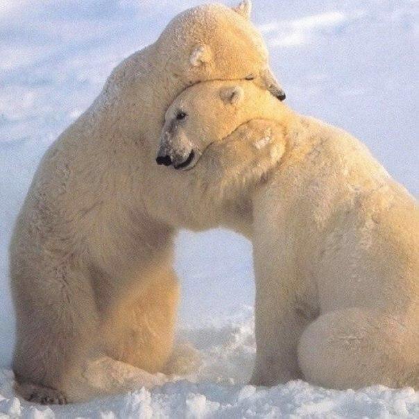 Обнимайте друг друга чаще. Крепче. Теплее и от души. Это так важно!...