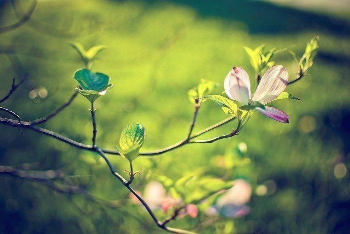 Притча о счастье и несчастье   Один китайский крестьянин прожил всю жизнь в...