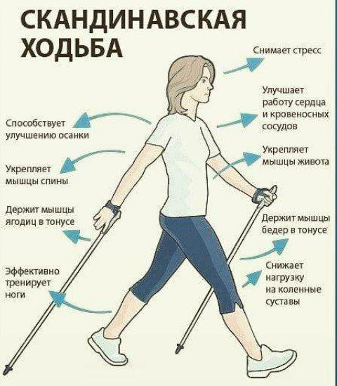 Целебная скандинавская ходьба  При обычной ходьбе мы задействуем максимум 70%...