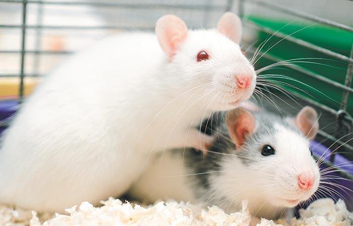Вселенная-25  Четырёх мышей поместили в мышиный рай, где была еда и питье в...