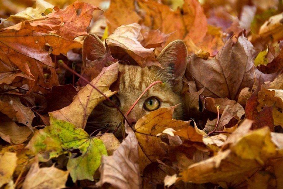 Осень всё ближе...  Эх, совсем скоро закончится это лето, как же быстро они...