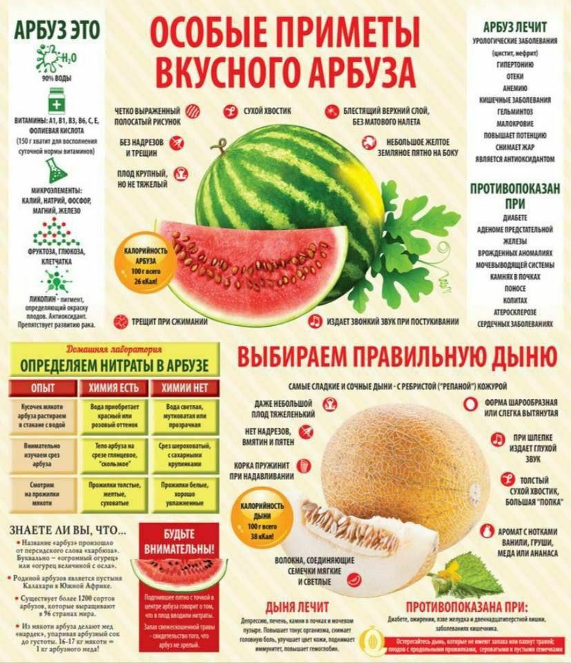 ️ Определяем самый вкусный арбуз и дыню  Арбуз содержит аминокислоту цитруллин...