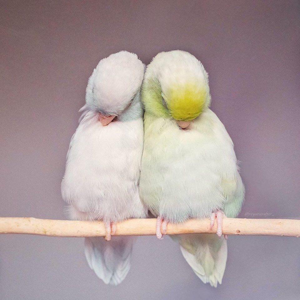 Ошибочно думать, что любовь вырастает из длительной дружбы и настойчивого...