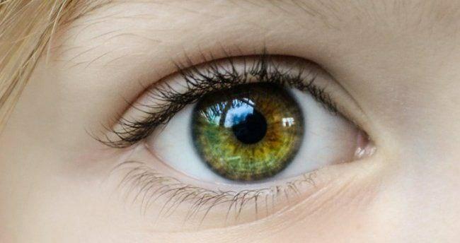 Роговица глаза — единственная часть тела человека, не имеющая снабжения...