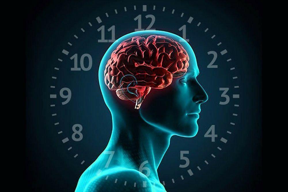С 6 до 7 ч утра – «окно», когда лучше всего работает долговременная память, вся...