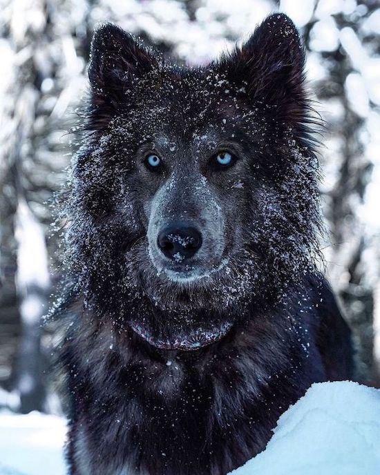 Если волк съел твоего врага, это еще не значит, что он стал твоим другом....